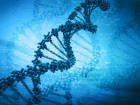 Melanoma Genes Found In \