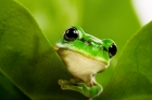 Near-extinct African amphibians \'invisible\' under climate change